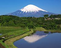富士山の恵み
